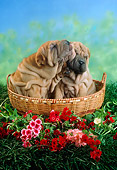 PUP 36 RC0014 01