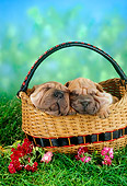 PUP 36 RC0015 01