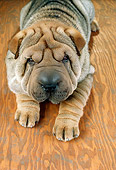 PUP 36 RC0017 01