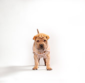 PUP 36 RK0001 12
