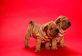 PUP 36 RK0011 03