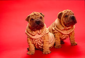 PUP 36 RK0011 05