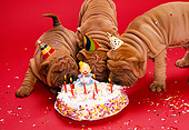 PUP 36 RK0016 07