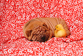 PUP 36 RK0019 01