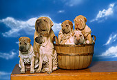 PUP 36 RK0025 03