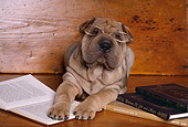 PUP 36 RK0039 30