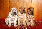 PUP 36 RK0052 06