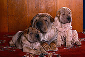 PUP 36 RK0057 12
