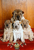 PUP 36 RK0057 56