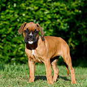 PUP 37 CB0001 01