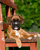PUP 37 CB0005 01