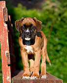 PUP 37 CB0006 01