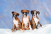 PUP 37 FA0004 01