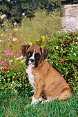 PUP 37 FA0008 01