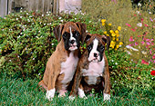 PUP 37 FA0009 01