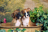PUP 37 FA0011 01