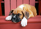 PUP 37 GR0007 01