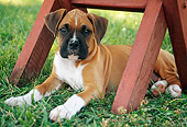 PUP 37 GR0012 01