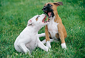 PUP 37 GR0014 01
