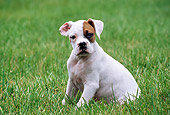 PUP 37 GR0018 01