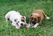 PUP 37 GR0024 01