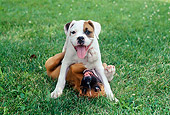 PUP 37 GR0027 01