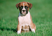 PUP 37 GR0033 01
