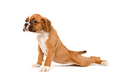 PUP 37 JE0001 01