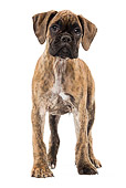 PUP 37 JE0002 01
