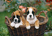 PUP 37 KH0008 01