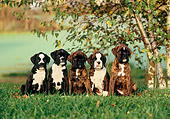 PUP 37 KH0009 01