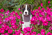 PUP 37 LS0002 01