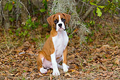 PUP 37 LS0003 01
