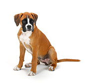 PUP 37 PE0001 01