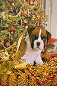 PUP 37 RK0036 01