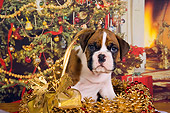 PUP 37 RK0037 01