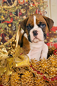 PUP 37 RK0038 01