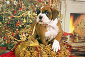 PUP 37 RK0040 01