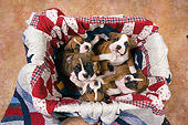 PUP 37 RK0042 01