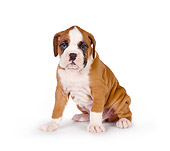 PUP 37 RK0046 01