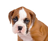 PUP 37 RK0047 01