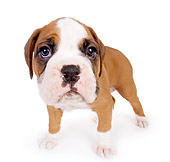 PUP 37 RK0050 01