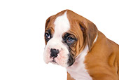PUP 37 RK0060 01