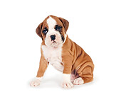 PUP 37 RK0065 01