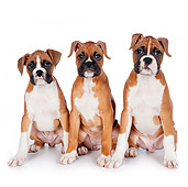 PUP 37 RK0083 01