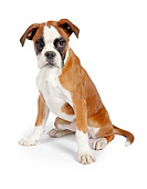PUP 37 RK0084 01