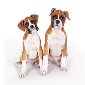 PUP 37 RK0085 01