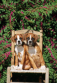 PUP 37 CE0002 01