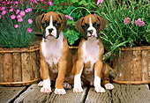 PUP 37 CE0003 01