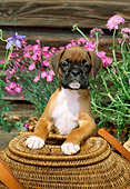 PUP 37 CE0004 01